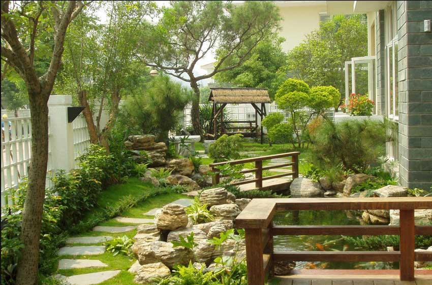 适合庭院种植的大树
